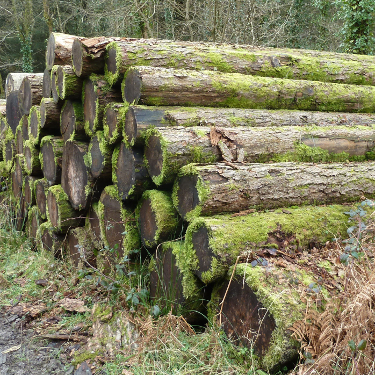 Old Larch logs